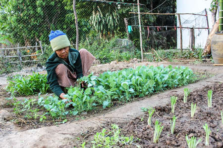 SURIN THAILAND-JANUARY 23  The unidentified woman sitting at a vegetable garden to be planted in food  On January 23, 2013  Surin, Thailand  Editorial