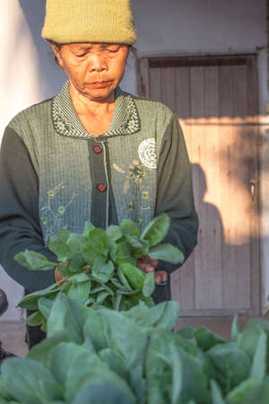SURIN THAILAND-JANUARY 23  The unidentified woman standing in a vegetable garden to be planted and sold  On January 23, 2013  Surin, Thailand