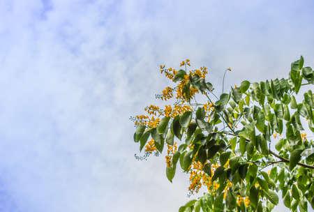 Albero nazionale della Stampa Tailandia Doccia Art Golden Tree Archivio Fotografico