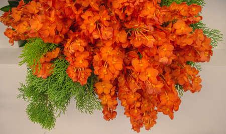 Beautiful orange  orchid flower in full bloom. photo