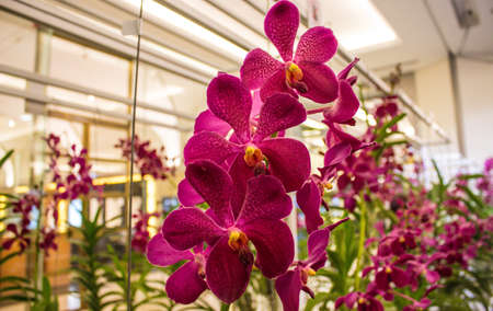 Beautiful pink orchid flower in full bloom. Stock Photo