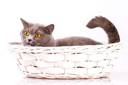 The cat is lying in a basket on a white background photo
