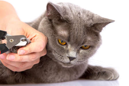 Doctor nails cut cat on a white background