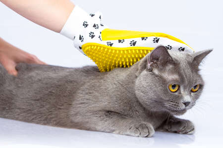 Doctor examines a cat on a white table against a white background Banque d'images
