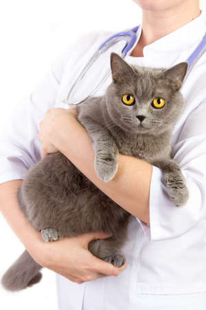 animals and pets: The doctor white coat with stetoscope holding a cat