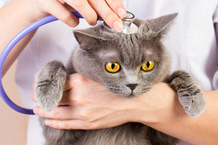 stetoscope: The doctor white coat with stetoscope holding a cat