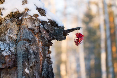 weighs: red lump weighs on the tree in winter