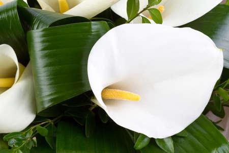 arum: A bouquet of white Calla lilies, close up