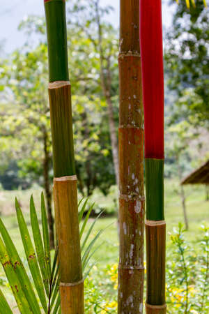 Bamboo trunks in bright colors. closeup