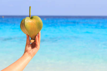 Female hand holding a fruit barringtonia, amid the Andaman sea. Similan Islands Stock Photo