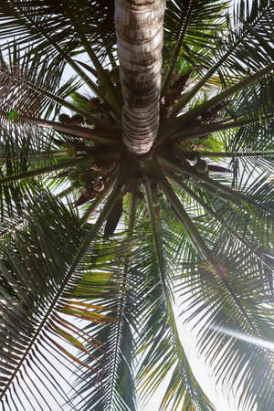 Palm Trees - palm view from the bottom. View. Stock Photo