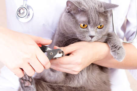 the vet cut the cats claws, white background