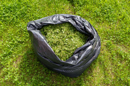 Black bag with freshly cut grass lying on the green lawn.