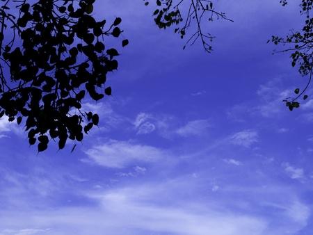 sotto l albero: Cielo blu sotto l'albero