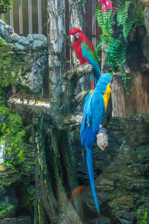 Colorful Macaw on a branch.