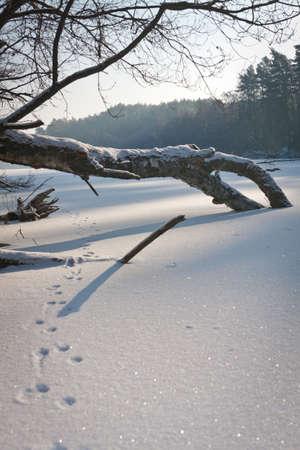 Tracking deer on frozen lake