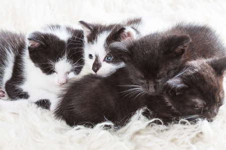 Sibling kittens gather close before taking a nap Stock Photo