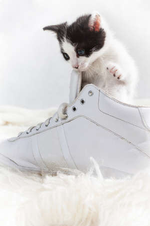 Young kitten exploring a shoe photo