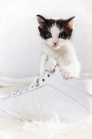 Young kitten sitting in a shoe Stock Photo - 14473812