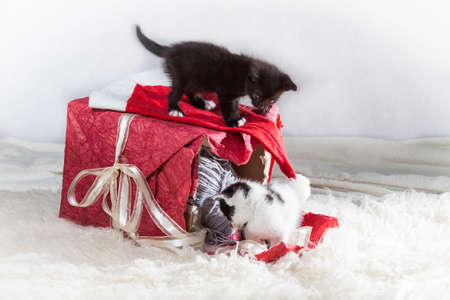 Young kittens playing on a present box