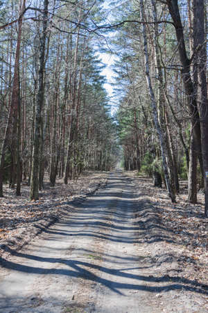 Forest path in early spring
