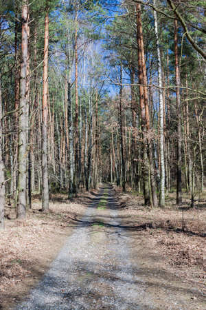 Early spring in a forest Stock Photo