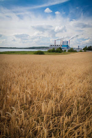 Rye field in front of a power plant
