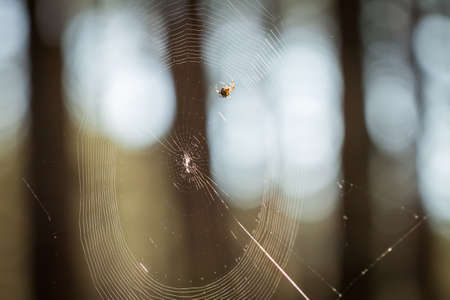 Small spider in a forest Stock Photo