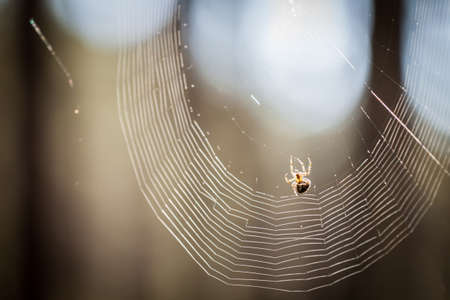 Spider hanging on a web
