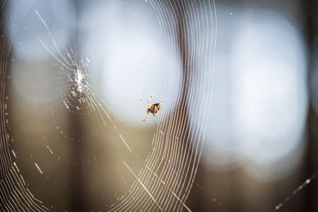 Spider in progress of spinning a web Stock Photo