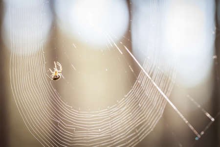 Backlit spider on a web Stock Photo