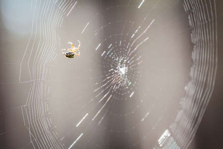 Spider working on its web
