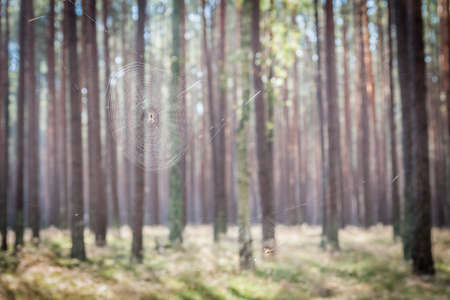 Spider webs in a forest Stock Photo