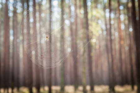 Spider web hanging in a forest Stock Photo