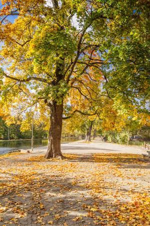 branchy: Branchy tree in a city park