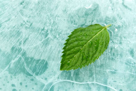 Mint leaf on ice