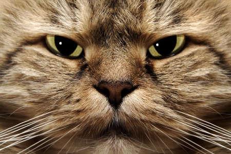 Close up of a cat muzzle