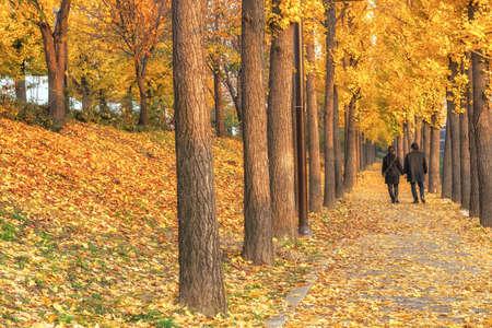 秋のシーズン中に庭をさまよっカップルはロマンチックになります。