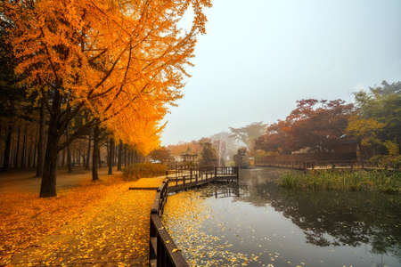 Automne beauté de l'île nami à l'automne. Les feuilles changent de couleur. Banque d'images