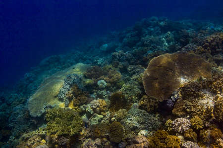 indo pacific: Seascape of a coral reef crest covered in brightly coloured hard and soft corals. Taken in the Wakatobi, Indonesia.