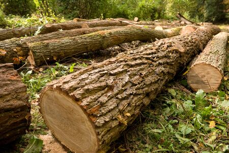 deforestation: Chopped trees laying on the ground in forest
