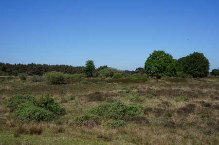 assen: Heathland nature reserve area called Great Sand near Assen, Drenthe in the Netherlands.
