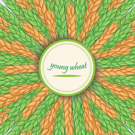 Ripe and green spikelets. Vector banner.Circular ornament with spike
