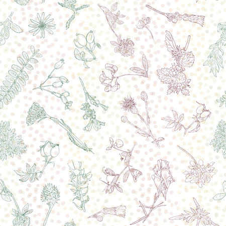 Wildflowers and berries seamless pattern. Dogrose, burdock, herbs background. Hand drawn vector botanical illustration. Design for packaging, fabric, wrapping, prints and other design Illustration