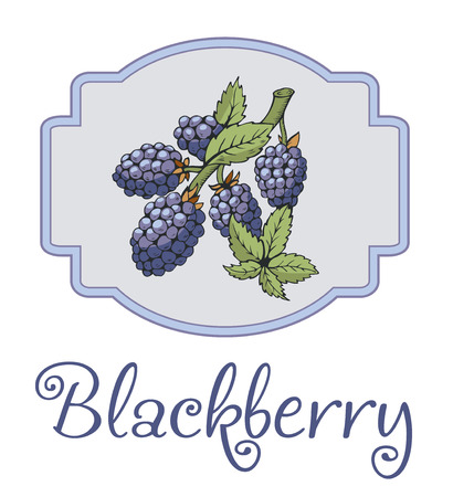 dewberry: Blackberry sticker with branch and leaves. Beautiful soft color picture. The picture can be used on the packaging, printing. Isolated label with purple stroke Illustration