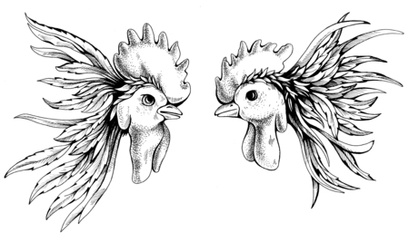 cockfighting: Hand drawing rooster fight. Drawn with ink and pen for your design. Rooster symbol of Chinese New Year. Stock Photo