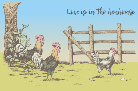 muck: Greeting card. Love is in the henhouse. Two roosters looking at the hen in the farm. Countryside. Beautiful nature, tree with leaves, next to the fence.