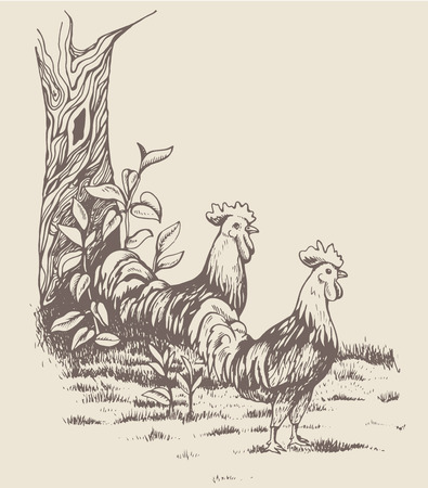 muck: Rooster and hen at the farm. Countryside. Beautiful nature. The tree with leaves, next to the fence, near the roosters running around. Two cock looking at chicken with love.