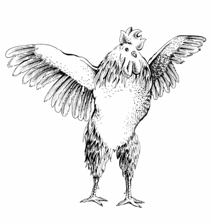 cockfighting: Illustration from the front rooster. Series of farm animals. Graphics, scetch, handmade drawing cock. Rooster wants to spread its wings and fly away. Vintage engraving style. Symbol New Year 2017