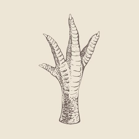 Huhn oder Hahn oder der Türkei Fuß. Vintage-Gravur-Stil. Illustration